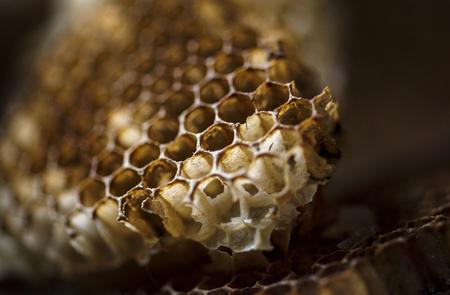 Macro shot of real beehives honeycomb