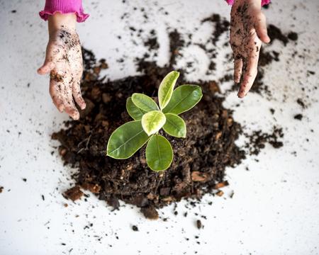 木を植える子供 写真素材