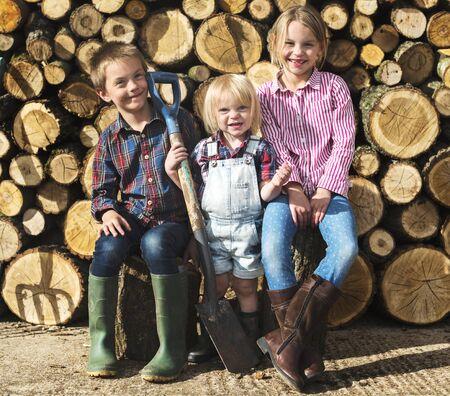 Brandhout Fuelwood Lumber Timmerhout Logboekconcept Stockfoto