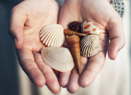Closeup of hands holding sea shells