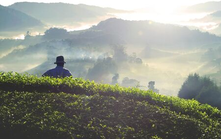 Farmer at tea plantation