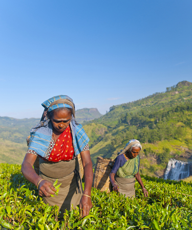 Tea pickers at a plantation in Sri Lanka Stock Photo