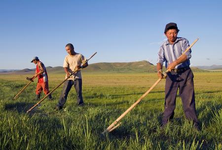 Three Mongolian farmers working hard. Stock Photo