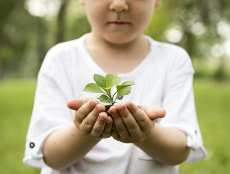 Little boy holding a plant Stock Photo