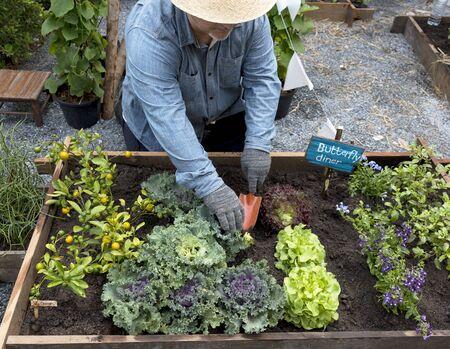 뒤뜰 정원에서 야채 심기 고위 성인