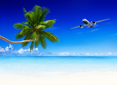 airplane and beach blue sky with palm tree.