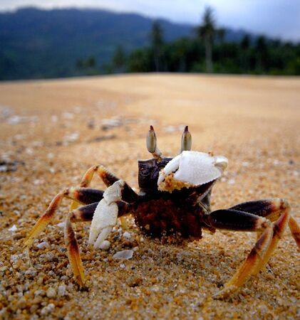 Crab on a sandy beach.