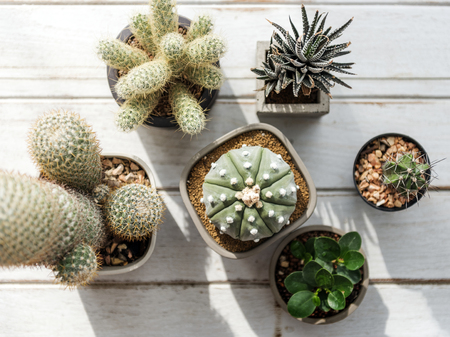 Various small Cacti Stock Photo