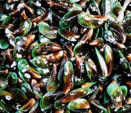 ムール貝がたくさん