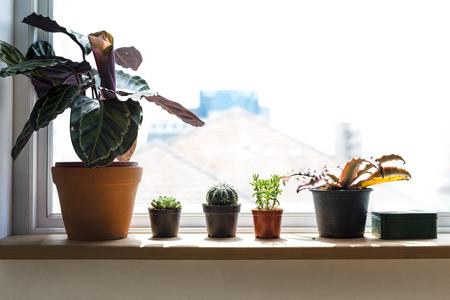 植物小さなハウスプラント自然の装飾 写真素材