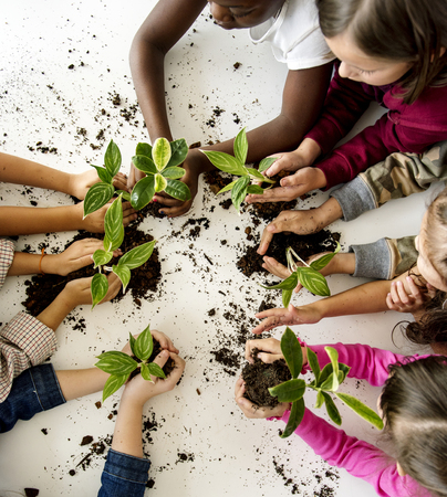 A group of primary schoolers planting a tree together