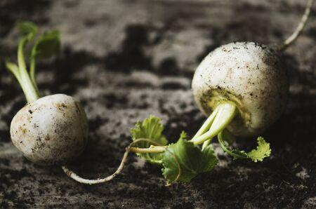 Fresh white beets vegetable