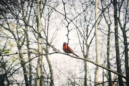 A red bird in the forest Stok Fotoğraf