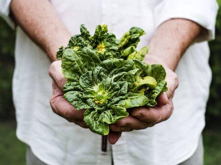 Handen die boerenkool organische opbrengst van landbouwbedrijf houden