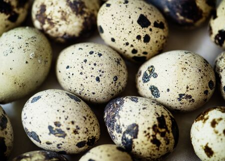 Fresh organic quill eggs Banco de Imagens