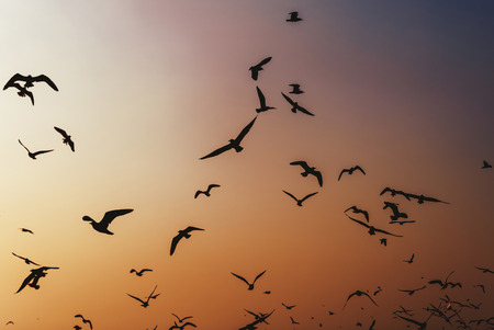 Birds flying around the sky at sunset