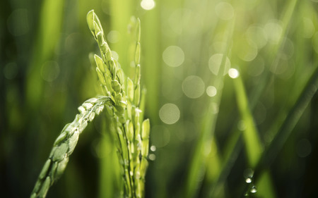 Beautiful greenery