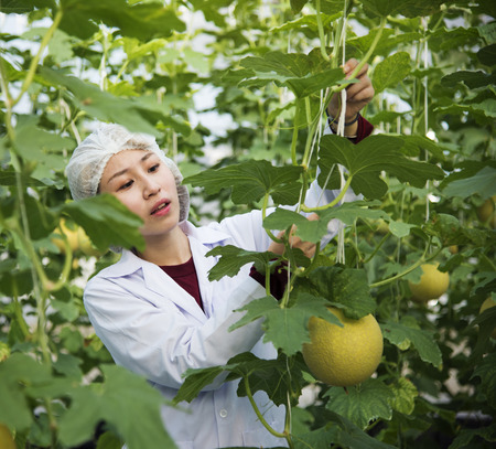Asian scientist studying plants and fruits
