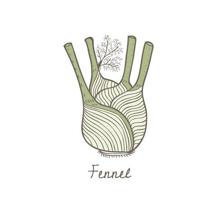Vector of a fennel Фото со стока - 95110854