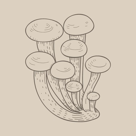 Vector of mushroom