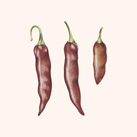 Hand drawing of chilis