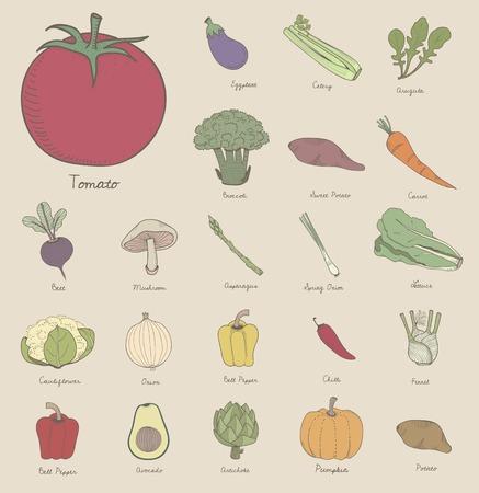 Vector de diferentes tipos de verduras Foto de archivo - 95111279