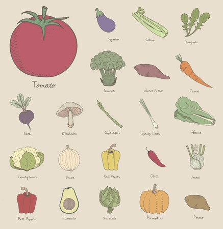 Vector of different kinds of vegetables 스톡 콘텐츠 - 95111279