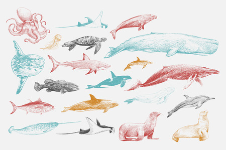 Illustration drawing style of marine life collection Фото со стока