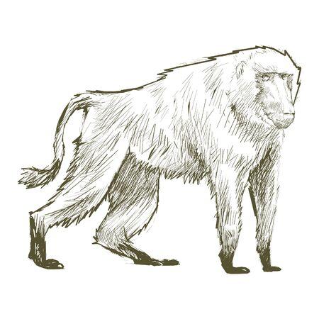 Illustration drawing style of monkey