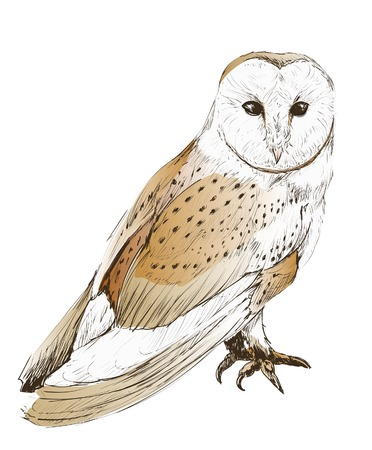 Illustration drawing style of owl 스톡 콘텐츠