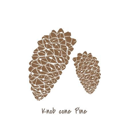 Knob cone pine concept