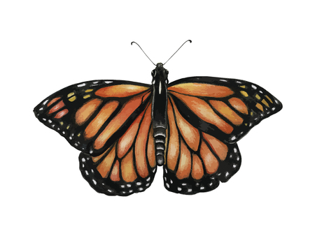 Butterfly concept Stock Photo - 115527527