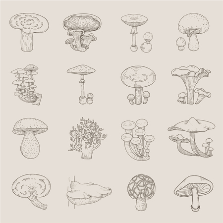 Vector of different kinds of mushrooms
