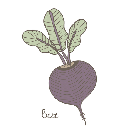 illustration of a beet