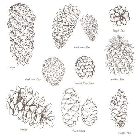 Vector of pinecone collection