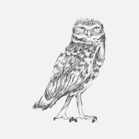 Illustration drawing style of owl Stock Photo