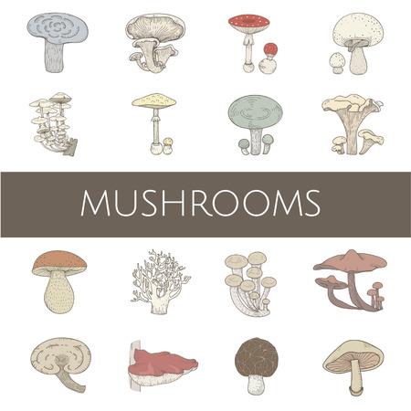 Vektor von verschiedenen Arten von Pilzen Standard-Bild - 95112874