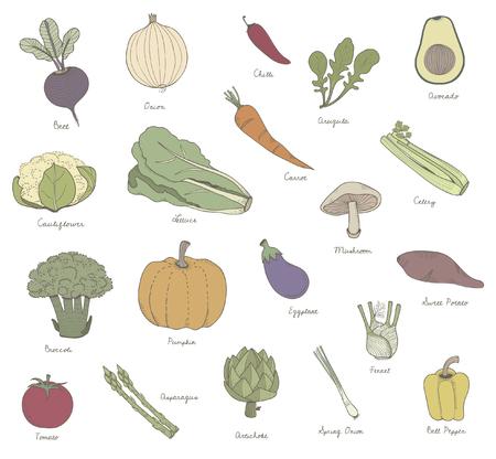 Vector de diferentes tipos de verduras Foto de archivo - 95112943