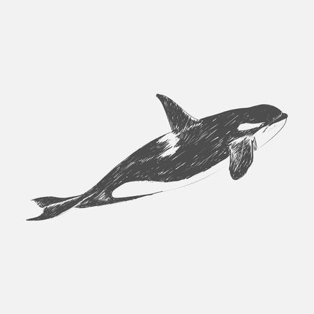 Illustration Zeichnung Stil von Killerwal Standard-Bild - 95597983