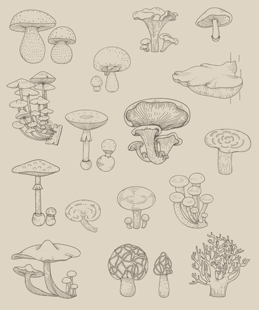 Vector of different kinds of mushrooms 스톡 콘텐츠 - 95113028