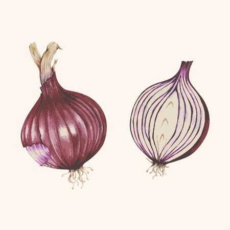 Onion concept