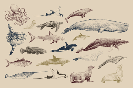 Illustration drawing style of marine life collection 写真素材