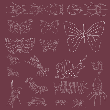 Vector of different kinds of insects Stok Fotoğraf