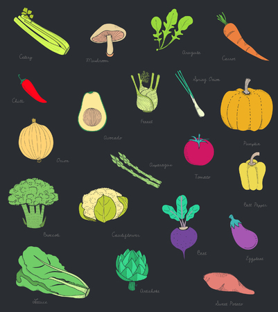 illustration of different kinds of vegetables 스톡 콘텐츠