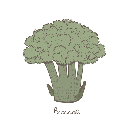 Illustration of a broccoli