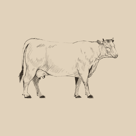 Illustration drawing style of cow Stock Illustration - 95597204