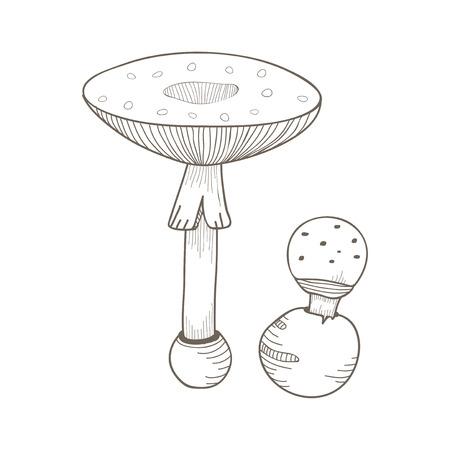Illustration von Pilz Standard-Bild - 95596185