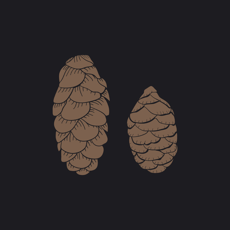 Conifer cones concept