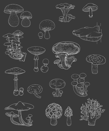 Illustration of different kinds of mushrooms