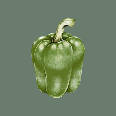 Illustration of bell pepper Stok Fotoğraf